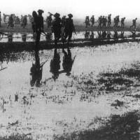 1 Aprile  1945. Commandos della marina inglese marciano lungo gli argini meridionali delle valli attraverso le campagne allagate