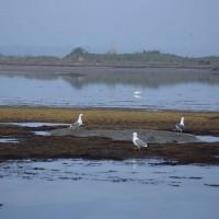 L'Isola degli Spinaroni oggi.