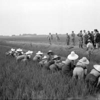 10 luglio 1941 nel carpigiano: visita alle mondariso del segretario federale Franz Pagliani insieme al segretario dell'Unione fascista lavoratori agricoltura