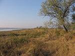 Vegetazione dell'isola.