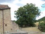 L'albero e la casa oggi.